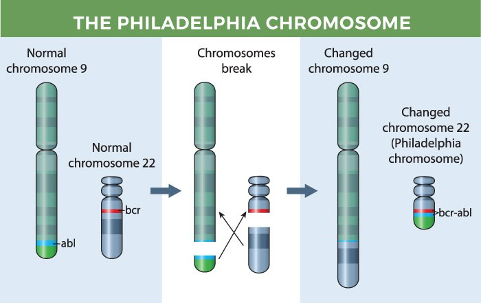 The Philadelphia chromosome.