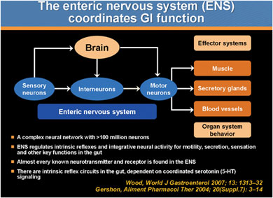 The integration of the enteric nervous system with the central nervous system and gastrointestinal tract. Adapted from Wood J. Neuropathophysiology of functional gastrointestinal disorders. World J Gastroenterol. 2007;13(9):1313-1332; and Gershon MD. Review article: serotonin receptors and transporters—roles in normal and abnormal gastrointestinal motility