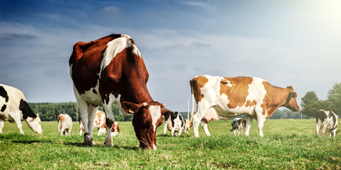 WHO asks farmers to stop using antibiotics in healthy animals