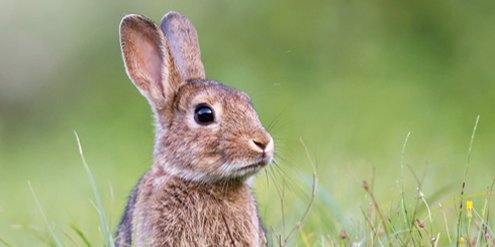 Five French patients infected with hepatitis E strain found in rabbits
