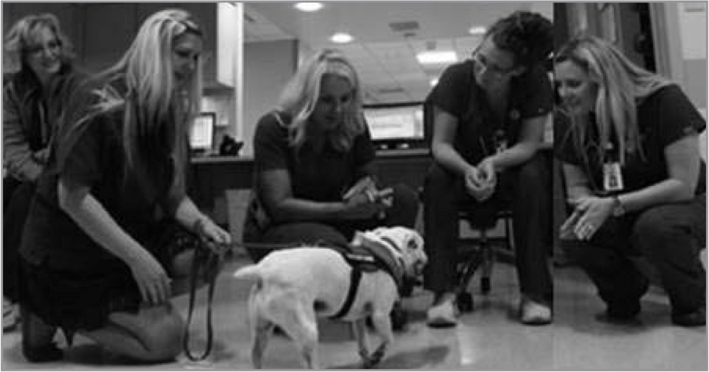 Nurses engage with the pet Vet as a welcome relief to the workday (photograph courtesy of Daniel Shrensky).