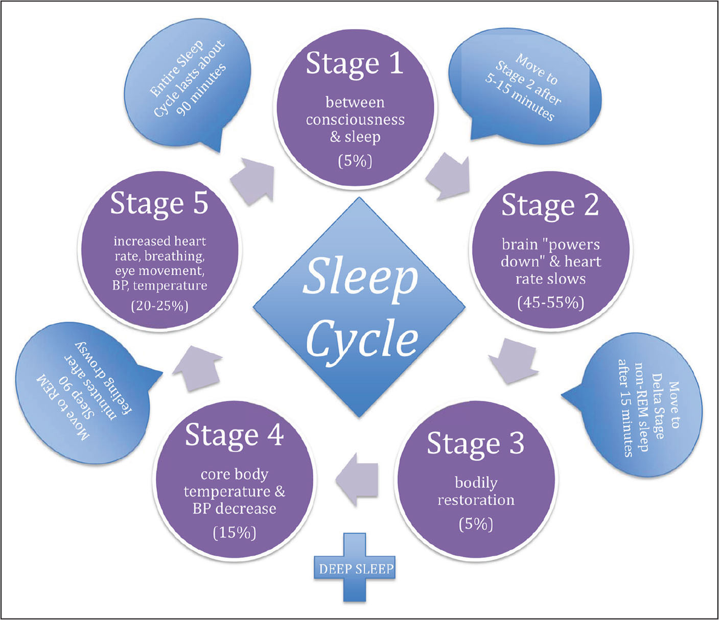 The sleep cycle.Adapted from the National Sleep Foundation (2017).