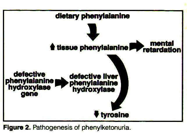 a description of the phenylketonuria pku disease and its spread Definition phenylketonuria (pku) is caused by the genetic mutation of the enzyme phenylalanine hydroxylase (pah), which converts the essential amino acid phenylalanine into tyrosine if its function is disrupted, an accumulation of toxic metabolic products occurs, which results in severe neurological damage if left untreated.