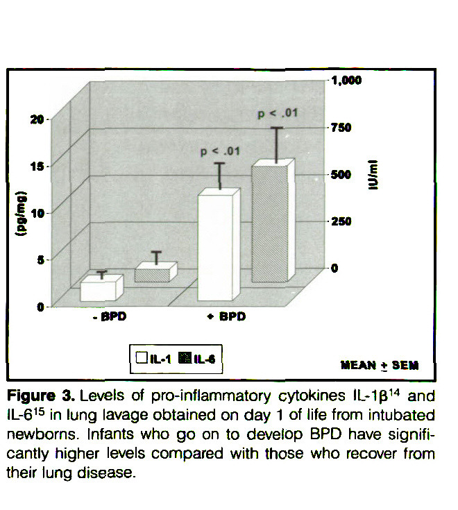 Figure 3. Levels of pro-inflammatory cytokines IL-1ß14 and IL-615 in lung lavage obtained on day 1 of life from intubated newborns. Infants who go on to develop BPD have significantly higher levels compared with those who recover from their lung disease.