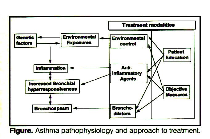 Figure. Asthma pathophysiology and approach to treatment.