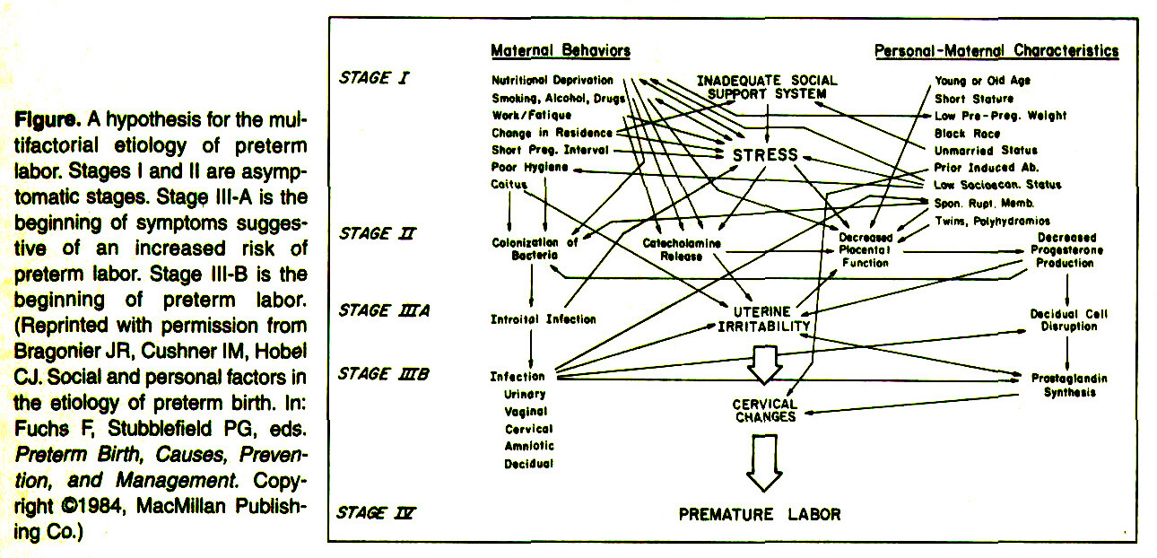 Figure. A hypothesis for the muftifactorial etiology of preterm labor. Stages I and II are asymptomatic stages. Stage HI-A is the beginning of symptoms suggestive of an increased risk of preterm labor. Stage IH-B is the beginning of preterm labor. (Reprinted with permission from Bragonier JR, Cushner IM, Hobel CJ. Social and personal factors in the etiology of preterm birth. In: Fuchs F, Stubblefield PG, eds. Preterm Birth, Causes, Prevention, and Management Copyright ©1984, MacMlllan Publishing Co.)