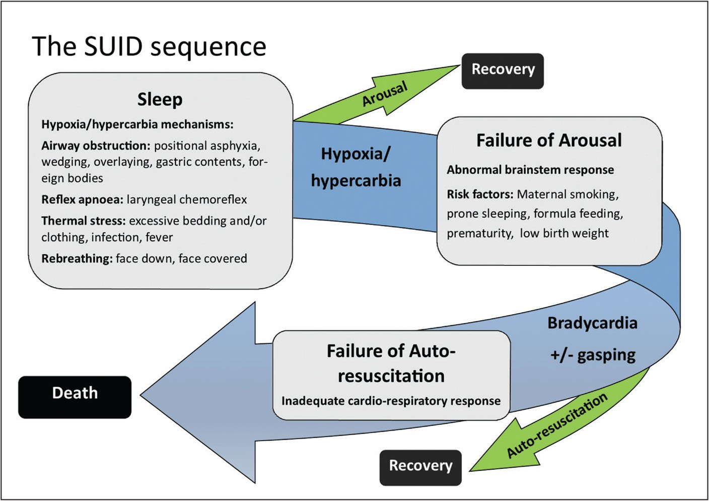 The major hypothesis for the sequence of events causing death in sudden unexpected infant death (SUID).