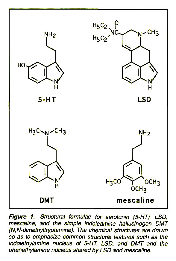 Figure 1. Structural formulae for serotonin (5-HT), LSD, mescaline, and the simple indoleamine hallucinogen DMT fN.N-tíimefbyftryptamine). The chemical structures are drawn so as to emphasize common structural features such as the indolethylamine nucleus of 5-HT, LSD, and DMT and the phenethylamine nucleus shared by LSD and mescaline.