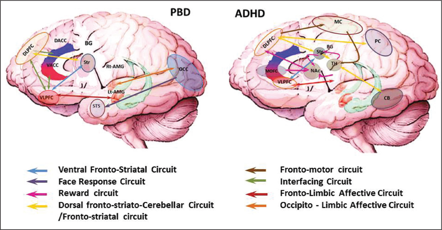 Differential Treatment Of Pediatric Bipolar Disorder And Attention Circuit 4 Stabilizes Power This Solves Affective Cognitive Networks In Deficit Hyperactivity