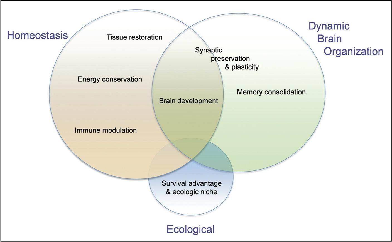 Benefits of sleep on health and brain function.