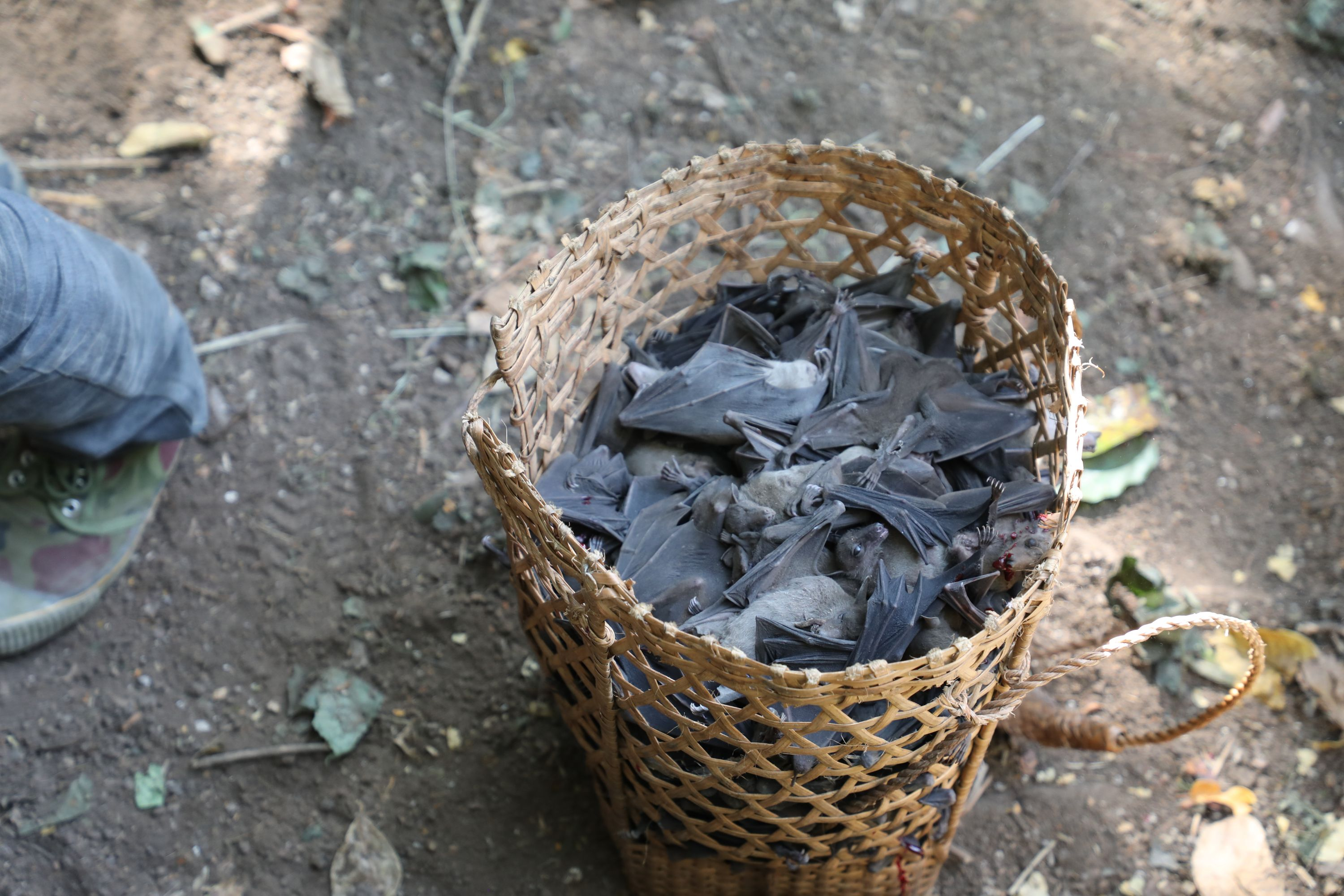 A photo of bats in a basket